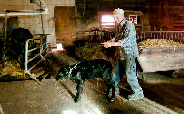 Record-Eagle/Douglas Tesner<br /> Dairy farmer Dean Edgecomb with one of his calves.