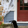Record-Eagle/Keith King<br /> A black cat steps off a porch Friday, October 29, 2010 at a house on Ninth Street in Traverse City.