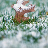 Record-Eagle/Jan-Michael Stump<br /> A leaf sits in the dusting of snow that fell early Friday morning in the Grand Traverse region.