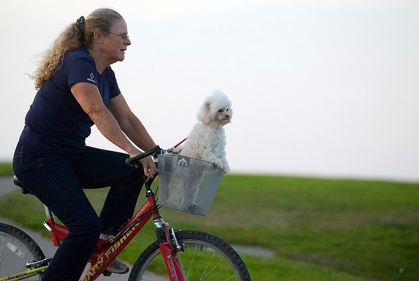 """Record-Eagle/Jan-Michael Stump<br /> Nan Lynch rides through the Open Space with her Pomeranian-Maltese Dusty on Monday evening. Lynch was riding with her husband Albert and their other dog Scout. Nan said riding in the basket was easier for Dusty than running alongside the bikes, like Scout. """"He doesn't get his feet dirty,"""" she said."""
