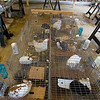 Record-Eagle/Keith King<br /> Rabbits and chickens are seen in their cages Tuesday at Antrim County Animal Control. Dozens of animals were seized from an Elmira home after authorities said the owner neglected them.