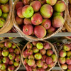 Record-Eagle/Jan-Michael Stump<br /> Apples sit in bushels for sale at Altonen Orchards farm market in Williamsburg. This year's harvest was bountiful despite being impacted by frost.