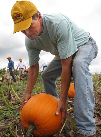 Record-Eagle/Sheri McWhirter<br /> Employee Charlie Bell lifts heavy pumpkins, part of the annual harvest for Hoxsie's Farm Market in Acme.