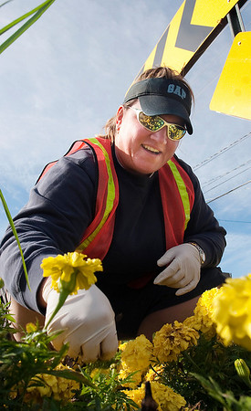 Record-Eagle/Douglas Tesner<br /> Jennifer Woodworth, a seasonal worker for the Traverse City Parks and Recreation Department, pulls weeds and dead flowers in one of the city's flower beds.