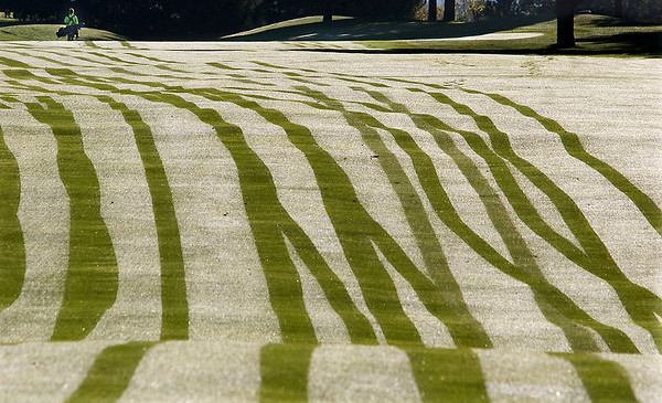Record-Eagle/Douglas Tesner<br /> A golfer walks down a dew-covered fairway during the  the Traverse City Central Girls Invitational at Traverse City Golf and Country Club. Lines on the grass are golf cart tracks.