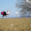 Record-Eagle/Keith King<br /> Zach Dorvinen, of Traverse City, balances on a slackline near West End Beach.