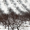 Record-Eagle/Jan-Michael Stump<br /> Recent cold may have affected area orchards and farms, like these on Old Mission Peninsula.