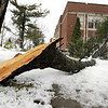 Record-Eagle/Keith King<br /> A broken branch lies on the ground Wednesday outside Central Grade School.
