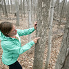 Record-Eagle/Keith King<br /> Kama Ross, district forester with the Benzie, Grand Traverse and Leelanau conservation districts, explains evidence of emerald ash borer beetles on an ash tree at the Grand Traverse Commons Natural Area in Traverse City.