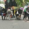 NORTHPORT DOG PARADE