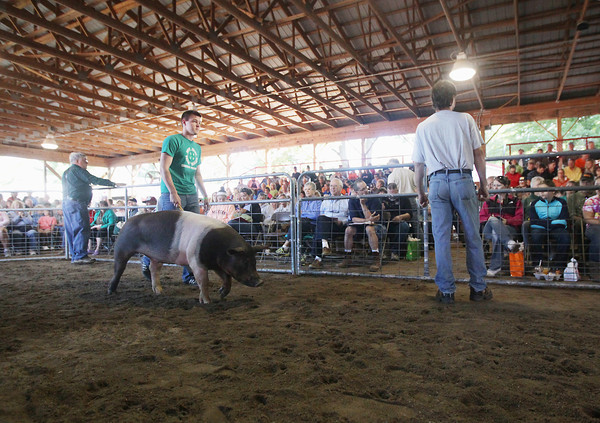 Record-Eagle/Keith King<br /> John Reed, of Traverse City, walks with his swine Thursday, August 8, 2013 during the 4-H livestock auction at the Northwestern Michigan Fair.