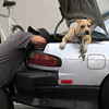 Record-Eagle/Jan-Michael Stump<br /> Daniel Rennie works on his car bumper while his dog Lightning keeps watch Friday at the Mobil gas station at the corner of 14th Street and Veterans Drive in Traverse City. Lightning had climbed through the open backseat into the trunk.