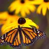 Spec Butterfly