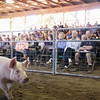Record-Eagle/Keith King<br /> Attendees look on as a swine walks past Thursday, August 8, 2013 during the 4-H livestock auction at the Northwestern Michigan Fair.