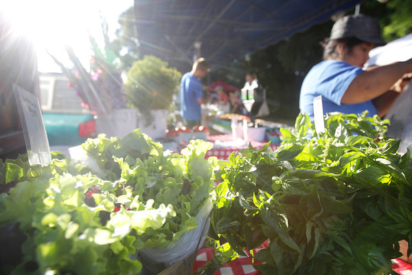 Record-Eagle/Keith King<br /> Lettuce, left, and basil, is displayed for sale at the Altonen Orchards stand Wednesday, August 7, 2013 during the Sara Hardy Downtown Farmers Market.