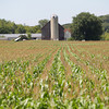 Record-Eagle/Keith King<br /> Corn grows Thursday, August 8, 2013 in Elmwood Township.