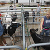 Record-Eagle/Keith King<br /> Nicole Seitz, right, 15, of Kingsley, cleans her calf as she prepares to show the calf Tuesday, August 6, 2013 during the annual Northwestern Michigan Fair in Blair Township.