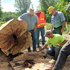 Record-Eagle/Jan-Michael Stump<br /> A group of surveyors, DNR employees and employees of Trees, Inc examine the stump of one of the few remaining Witness Trees -- used for surveying -- in northern Michigan after it was cut down Tuesday in Kalkaska County's Rapid River Township. The sugar maple, marked in 1850 at what is now the intersection of Wallace and Smith Roads, was only 10 inches in diameter when the surveyor marked it with an axe to be used as a reference point to locate the corners of sections 8, 9, 16 and 17 in the township. A crew from Trees, Inc. did the top part of the dead tree's removal first, and Michigan DNR representatives cut down the remaining trunk, parts of which will be used for plaques by the Northern Chapter of the Michigan Society of Professional Engineers. A sign will be placed on a post sunk in the remaining tree trunk explaining its history and the use of witness trees in surveying.