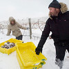 Record-Eagle/Jan-Michael Stump<br /> Robert Dalese, of Adelaide, Australia, and his wife, Sarah, climb through a waist-deep snow drift while picking frozen riesling grapes at Chateau Chantal on Old Mission Peninsula on Tuesday morning. Robert Dalese is the brother of vineyard manager Paul Dalese, whom he and Sarah were visiting as part of their honeymoon.
