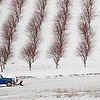 Record-Eagle/Jan-Michael Stump<br /> An orchard sits in the snow along Setterbo Road near Suttons Bay.