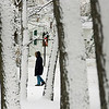 Record-Eagle/Keith King<br /> A person is visible through snow-covered trees Thursday at the Grand Traverse County Civic Center.