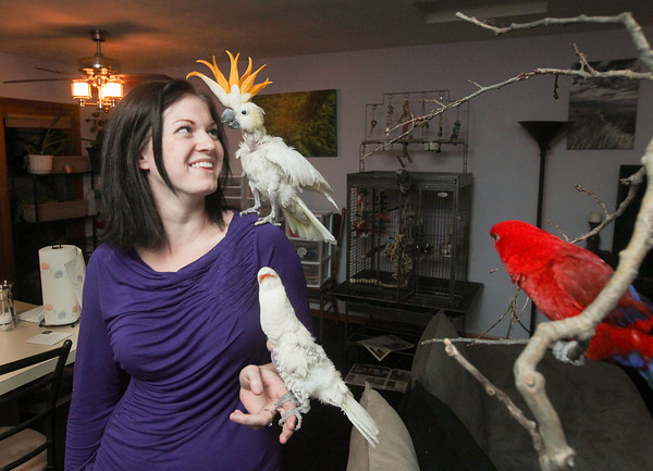Record-Eagle/Keith King<br /> Tara Hurlin, of Traverse City, who along with her husband, Jake, runs Hurlin's Parrot Rescue, looks at a Citron cockatoo on her shoulder while holding a Goffins cockatoo as a Red Lory parrot, all rescued birds, is perched nearby.