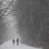 Record-Eagle photo/Jan-Michael Stump<br /> Holly, left, and Gary MacAulay take their dog Zack for a snowy morning walk along the Leelanau Trail near Traverse City.
