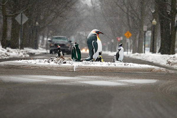 Record-Eagle/Jan-Michael Stump<br /> Penguins stand sentinel in the roundabout at Webster and Wellington Streets as a winter storm moves into the Grand Traverse Area on Friday afternoon. The penguins have been placed there by neighbors after a driver crashed into the tree that used to sit there over a week ago.