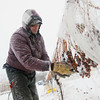 Record-Eagle/Keith King<br /> Constancio Salmeron, along with others, gathers frozen grapes Wednesday during the ice wine harvest at Chateau Chantal on Old Mission Peninsula. Grapes must be frozen on the vine for about 24 hours at temperatures between 15-18 degrees Fahrenheit in order to make ice wine.