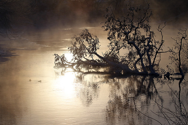 Record-Eagle/Jan-Michael Stump<br /> Frost coats tree branches as mist rises from the Boardman River near East Eighth Street in Saturday morning's subzero temperatures.