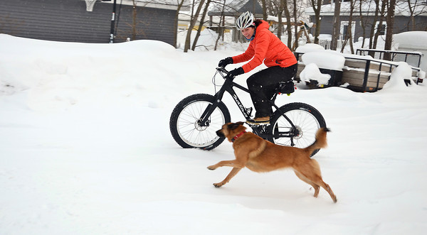 Record-Eagle/Allison Batdorff<br /> Michele Howard uses her fat bike to run errands around Traverse City in the wintertime, she said. Her dog Rosie likes to keep pace. Fat bikes aren't built for speed but stick to slippery terrain like snow and sand.