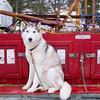 Kalkaska Winterfest