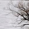 BOARDMAN LAKE SKATER