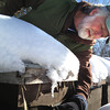 Record-Eagle/Nathan Payne<br /> Greg Griswold leans over a row of his bee hives Wednesday morning to look at a few bees that crawled out of their hibernation chamber during the warm day. Griswold takes his chances with the harsh winter and must wait for the spring thaw to see if his hives survived in good shape.