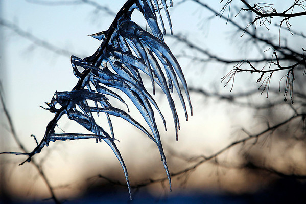 Record-Eagle/Jan-Michael Stump<br /> Icicles hang from a tree branch near Eighth Street late Monday afternoon.