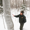 Record-Eagle/Keith King<br /> Ken Hiser, biologist with the Sleeping Bear Dunes National Lakeshore, explains beech scale, a cause of beech bark disease, as it's in its winter stage on an American beech tree near Pierce Stocking Scenic Drive.