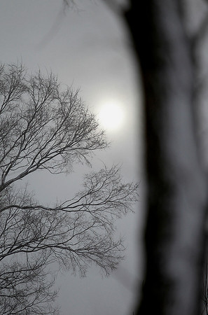 Record-Eagle/Jan-Michael Stump<br /> The sun tries to peek through clouds and snow-covered trees on Emerson Road during a cold Friday morning.