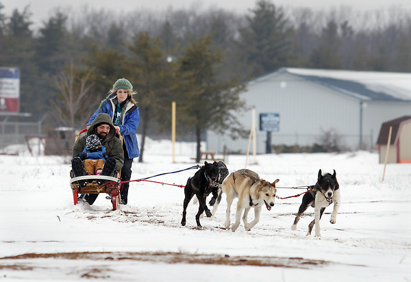 Record-Eagle/Keith King<br /> Mandy Collins, of Mancelona, drives her sled dog team as Trevor Jerdee, of Fife Lake, and his son Colton Jerdee, 2, enjoy a ride as part of sled dog demonstrations at the Kalkaska County fairgrounds Saturday, January 19, 2013 during Kalkaska Winterfest. The dogs are Eurohounds, a cross between an Alaskan Husky and Pointer.