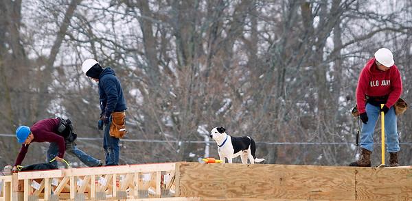 Dog, Construction