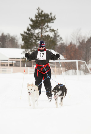 Record-Eagle/Keith King<br /> Jackie Gort, of Rapid City, crosses the finish line skijoring with Illmar, left, her husky/greyhound mix, and Sasha, an Alaskan husky owned by Kerry Mosko, of Kalkaska, Friday at the Kalkaska County fairgrounds during the annual Kalkaska Winterfest. Kalkaska Winterfest is scheduled through Sunday.