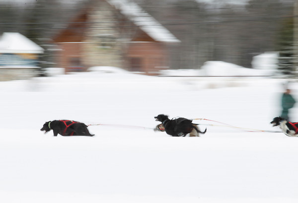 Record-Eagle/Keith King<br /> A sled-dog team takes off from the starting line Friday at the Kalkaska County fairgrounds during the annual Kalkaska Winterfest, which is scheduled through Sunday.