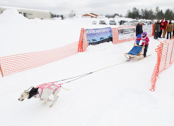 Record-Eagle/Keith King<br /> Lily Betten, 10, of Grand Rapids, takes off from the starting line with Rain, left, and Tulip, right, both Eurohounds, during sled-dog races at the Kalkaska County fairgrounds during the annual Kalkaska Winterfest. Kalkaska Winterfest is scheduled through Sunday. Betten has been sled-dog racing since she was five years old.