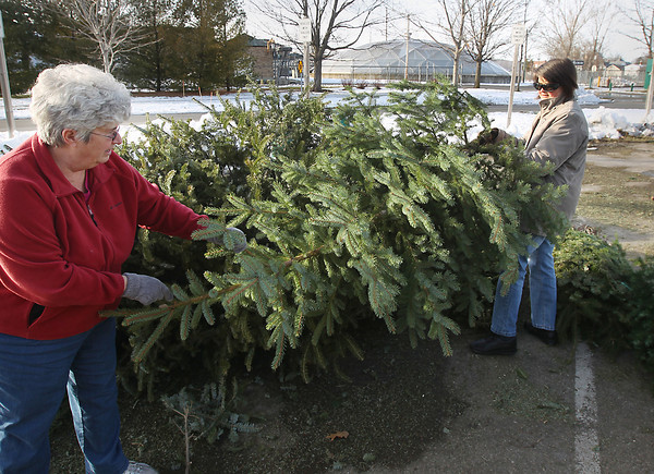 Record-Eagle/Keith King<br /> Joan Kroupa, left, of Old Mission Peninsula, and her daughter, Michelle Kroupa, of Traverse City, set Michelle's Christmas tree Thursday, January 10, 2013 onto the Christmas Tree drop site at Hull Park in Traverse City. Trees, wreaths and garland can be dropped off at the site, at no charge, until Sunday, January 20. The trees, wreaths and garland will be chipped and used for trail maintenance and erosion control.