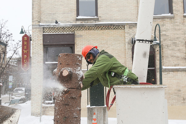 Record-Eagle/Keith King<br /> Adam Cole, with the City of Traverse City Parks and Recreation Department, uses a chainsaw to cut sections of the Downtown Tree, a blue spruce, as it's removed from the intersection of Front Street and Cass Street in downtown Traverse City.