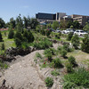 Record-Eagle/Keith King<br /> A creek bed where Kid's Creek is proposed to run Thursday, July 11, 2013 at Munson Medical Center as part of the Kid's Creek restoration project.