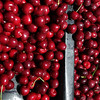 Record-Eagle/Keith King<br /> Dark sweet cherries fresh from the tree.