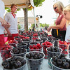 Record-Eagle/Keith King<br /> Renee Dawson, of Minneapolis, Minn., and Tara Dawson, 10, are assisted by Dave Wilsey, from left, and Lance Klaty, with sweet cherries from Edmondson Orchard during the National Cherry Festival.