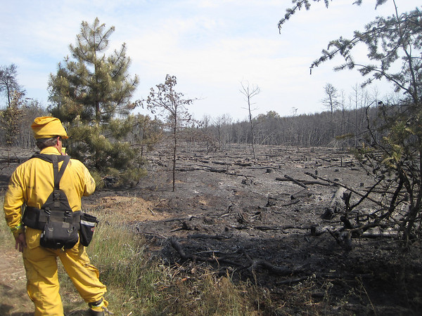 Record-Eagle/James Russell<br /> Rod Rader, fire supervisor for the Department of Natural Resources, surveys damage from a wildfire that burned approximately 35 acres of state forest Saturday in Whitewater Township.