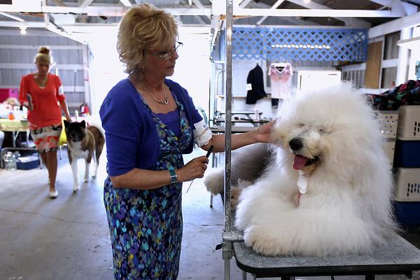 Spec Dog Show