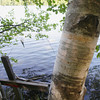 Record-Eagle/Keith King<br /> A cross stands on the shore at North Twin Lake Wednesday, June 19, 2013 near a tree with names and words engraved in it near Twin Lakes Park in Long Lake Township.